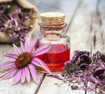 Nalewka z jeżówki purpurowej - przepis