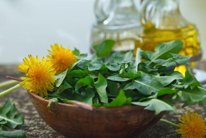 Wiosenna sałatka z mniszka lekarskiego - gdzie zbierać i jak jeść liście mlecza