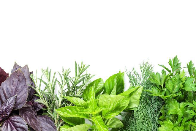 Świeże zioła w kuchni - które do mięsa, które do deserów? [WIDEO]